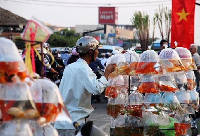 Các điểm bán cá cảnh đưa tiễn ông Táo đã nhộn nhịp từ ngày hôm qua 10-2.