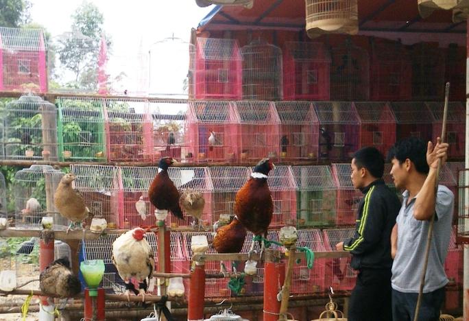Chim được bày bán tràn lan qua địa phận xã Hà Lĩnh nhiều ngày qua