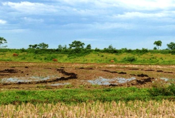 Khu vực ruộng lúa, nơi 1 số nông dân làm đất trồng lúa phát hiện nhiều cổ vật
