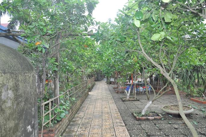 Cơ ngơi rộng 10.000 mét vuông của nghệ sĩ Giang còi được anh chăm chút trồng nhiều cây.