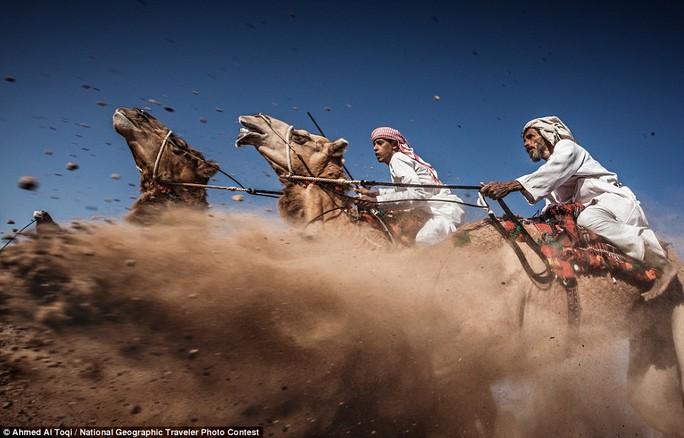 Đua lạc đà tại lễ hội truyền thống