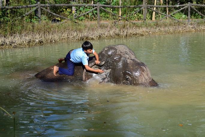 Quản tượng Quyết tắm cho voi Gen