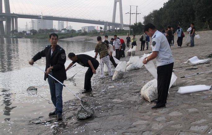 Người dân vớt cá chết ở sông Hải Hà hôm 20-8. Ảnh: Reuters