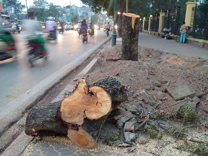 Chặt hạ cây tại đường Lê Duẩn trước đó