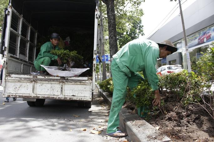 Nhân viên của Công ty Công viên Cây xanh đang tiến hành di dời những cây xanh nhỏ thuộc giao lộ Trần Hưng Đạo- Phạm Ngũ Lão