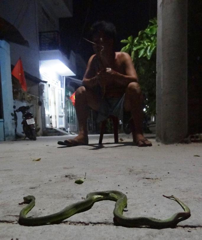 Một con rắn lục bị người dân đập chết ở quận 12, TP HCM