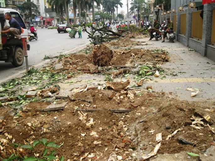 Quanh vụ chặt hạ, thay thế cây xanh ở Hà Nội còn nhiều câu hỏi. Ảnh: Chặt cây trên đường Nguyễn Chí Thanh -  Nguyễn Hưởng