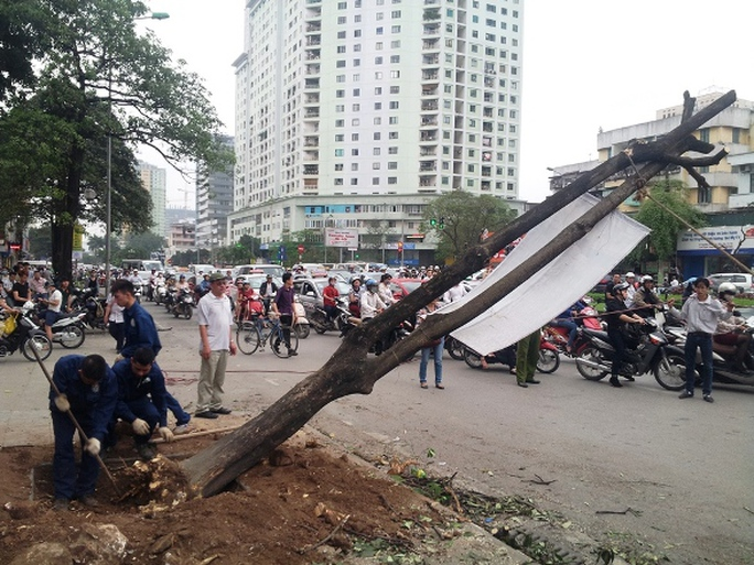 Dầm mưa kêu gọi dừng chặt cây xanh hàng loạt tại Hà Nội