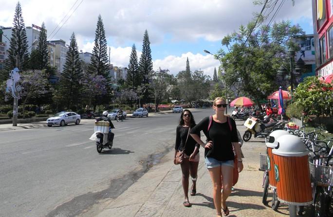Hoa phượng tím nở dọc theo hai bên đường đi vào chợ Đà Lạt, rất nhiều du khách đến chiêm ngưỡng.