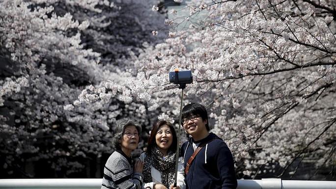 Nhiều người thích thú chụp hình với hoa anh đào. Ảnh: Reuters