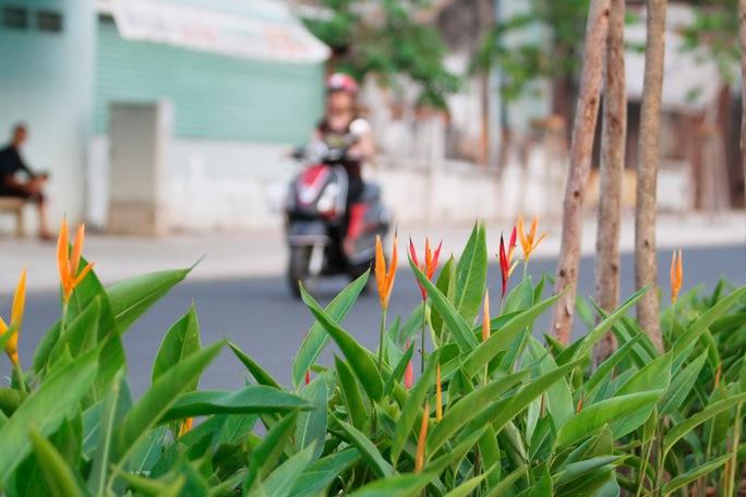Tuyến đường dọc 2 bờ kênh được trang trí bằng cây xanh, hoa kiểng