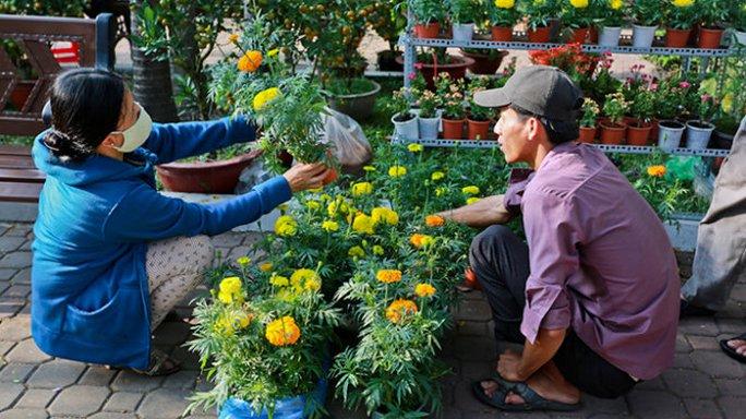 Anh Nguyễn Văn Hoàng bán 5.000 đồng/chậu hoa cúc vạn thọ, nhưng khách vẫn chọn lên chọn xuống - Ảnh: Tiến Thành