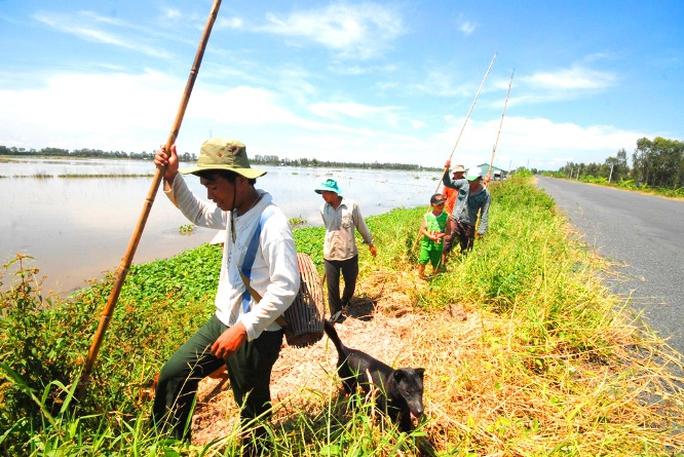 Chuột đồng ở miền Tây có quanh năm nhưng nhiều nhất vào mùa lúa chín. Nhiều người dân thành lập đoàn từ 5-7 người đi săn chuột ở ngoài đồng.