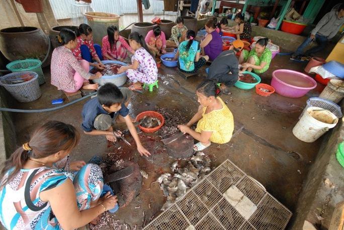 Chợ chuột Phù Dật ở xã Bình Long, huyện Châu Phú (An Giang) được xem là chợ chuột lớn nhất miền Tây, nơi đây là điểm tập kết tiêu thụ chuột đồng trong nước và cả chuột từ Campuchia mang qua bán.