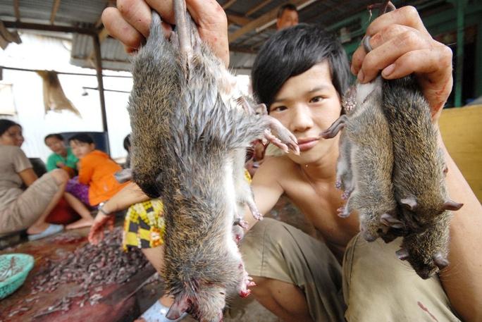 Chuột đồng có hai loại ăn được là chuột cơm và chuột cống nhum. Thức ăn chủ yếu của chuột là các loại nông sản và cỏ non, sống ở xa khu dân cư nên ít mầm bệnh. Đa phần chuột ở chợ Phù Dật thu mua bao nhiêu cũng không đủ đáp ứng theo các đơn đặc hàng, nhất là nhà hàng và quán nhậu.