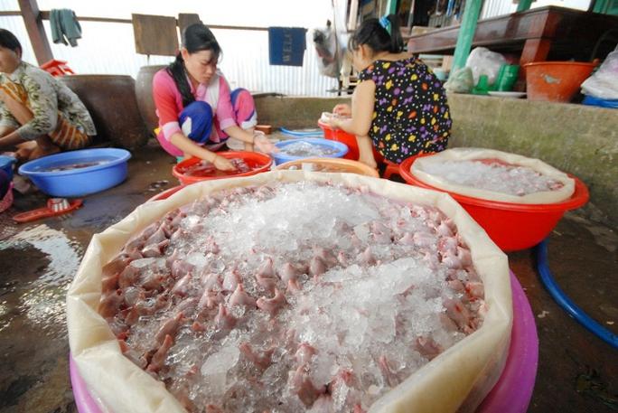 """Chuột được làm sạch đưa vào thùng ướp nước đá, có thể """"uất xưởng"""" đi khắp các tỉnh miền Tây và cả TP HCM."""