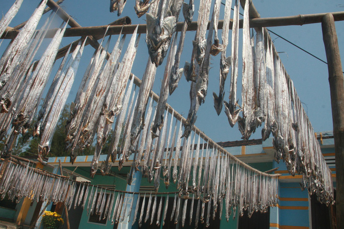 Cá hố được người dân thôn Tỉnh Thủy, xã Tam Thanh, TP Tam Kỳ phơi đầy sân