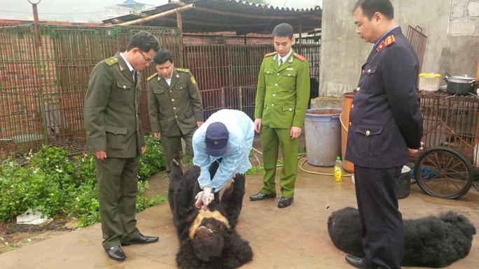 khám nghiệm làm rõ nguyên nhân gấu chết tại 1 cơ sở nuôi