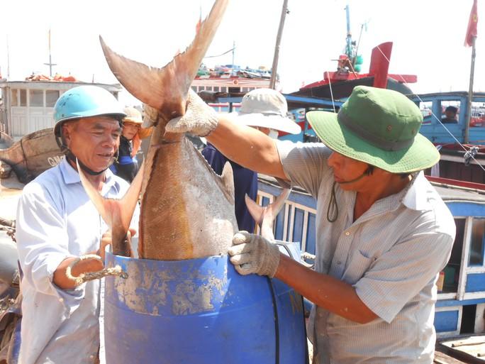 Nhiều tàu cá của ngư dân Lý Sơn thu bạc tỉ ở Hoàng Sa