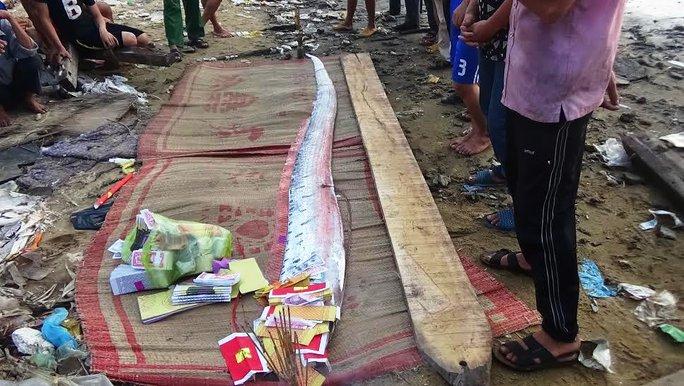 Con cá ông Phướn đã được người dân chôn cất theo phong tục địa phương