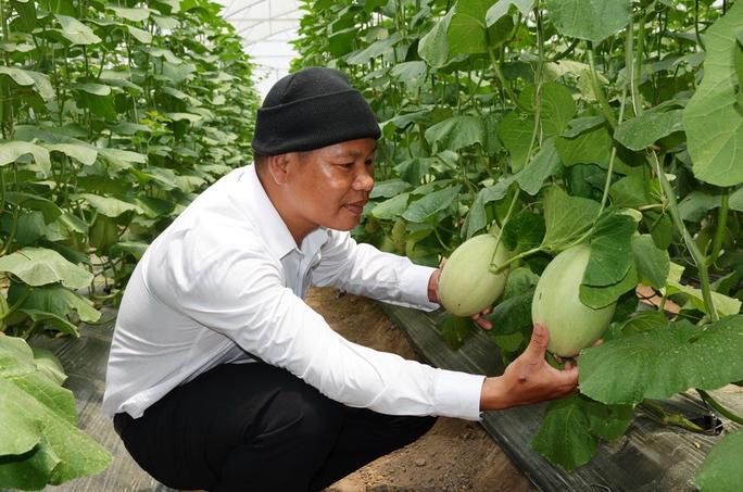 Anh Nguyễn Văn Quán đang theo dõi quá trình tăng trưởng của dưa lưới