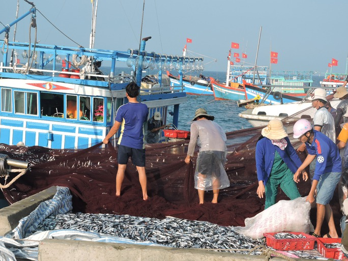 Ngư dân Lý Sơn hả hê bởi trúng lộc biển đầu năm