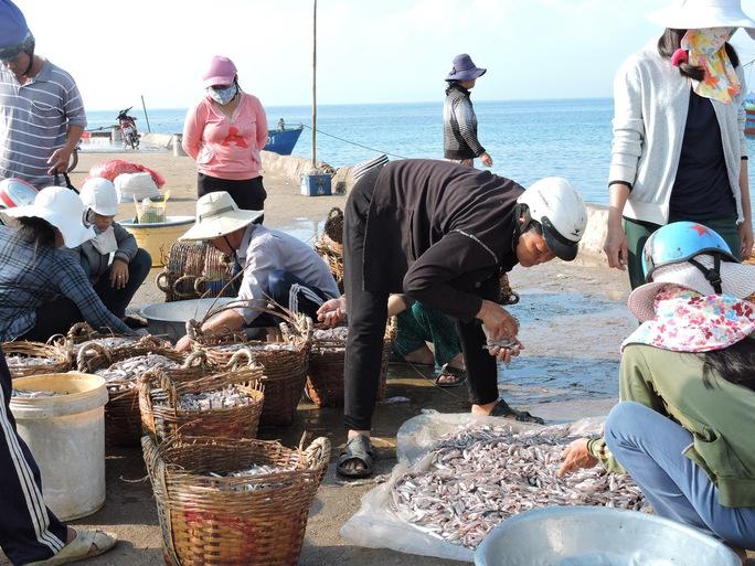 Ngư dân chuyển cá cơm than lên bờ bán cho tư thương.