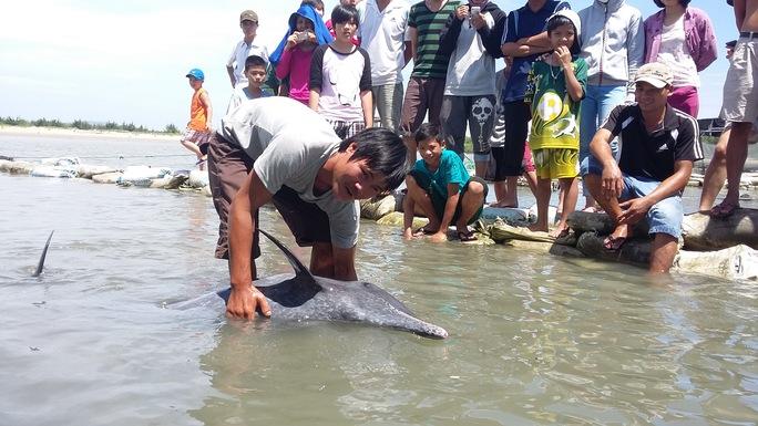 Cá heo dài 1,6 m mắc kẹt trên bãi biển Vũng Tàu
