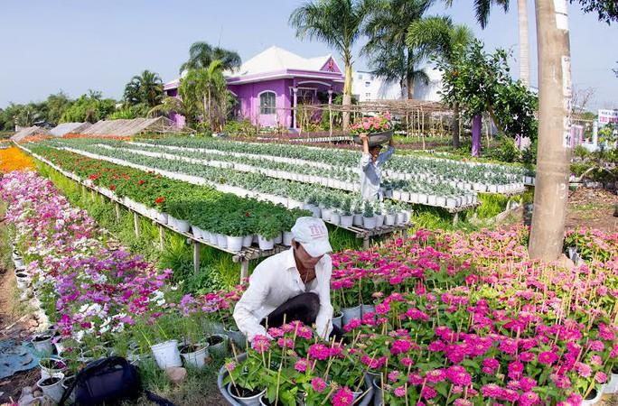 Các loại hoa đua nhau khoe sắc ở làng hoa Sa Nhiên, Se Đéc, tỉnh Đồng Tháp