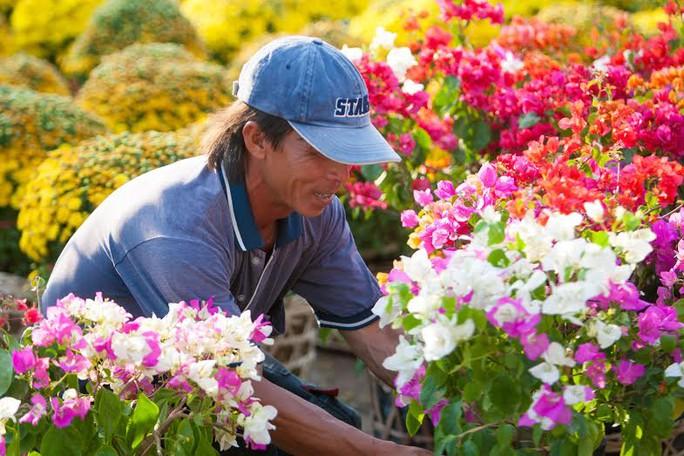 Nông dân làng hoa Sa Nhiên, Se Đéc, tỉnh Đồng Tháp chăm chút cho từng khóm hoa Tết