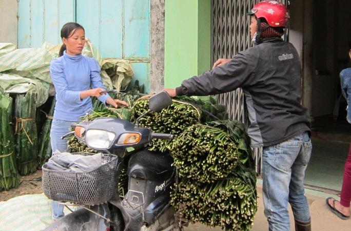 Lá dong rừng đang được thương lái thu mua vận chuyển về xuôi tiêu thụ