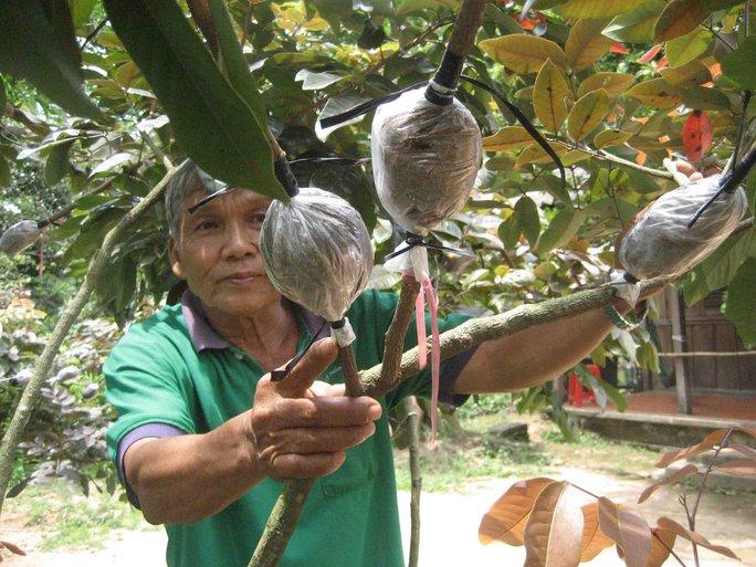 Ông Bảy Huy bắt đầu chiết nhánh để cung cấp cho các nhà vườn