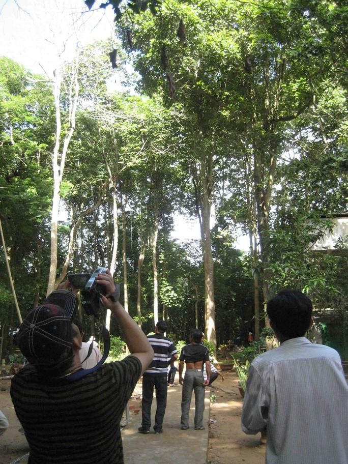 Những con dơi quạ treo lủng lẳng trên cây trong khuôn viên chùa