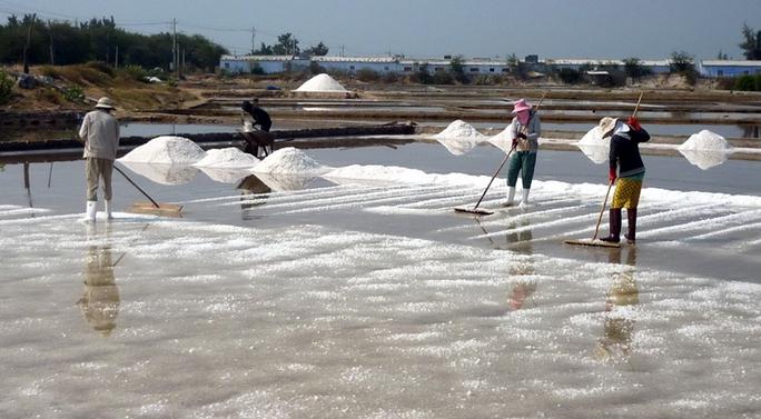 """Muối mất giá, thị trường tiêu thụ khó khăn, diêm dân Ninh Thuận đối mặt với một… """"mùa muối lạt"""""""