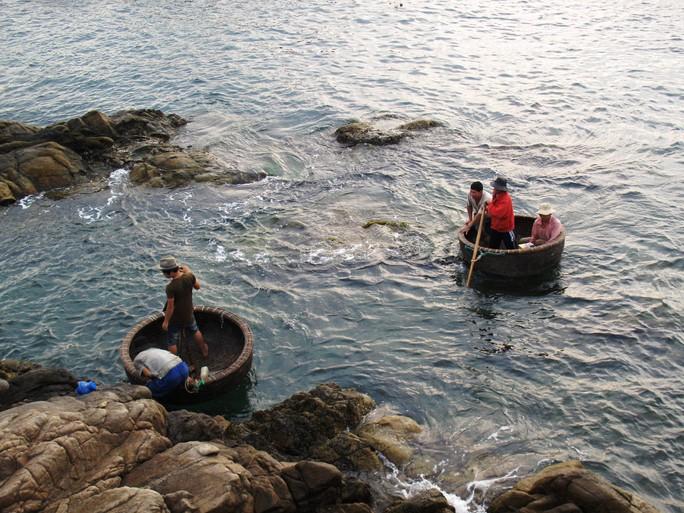 Những người khai thác tôm hùm giống vào bờ