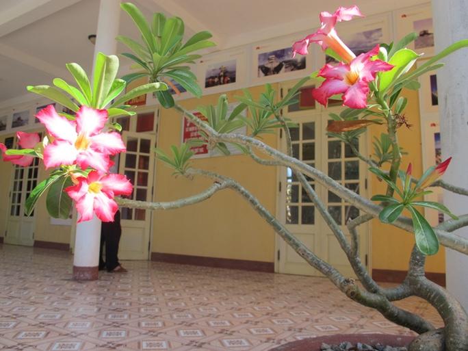 Hoa sứ khoe sắc đến đảo Nam Yết thuộc quần đảo Trường Sa