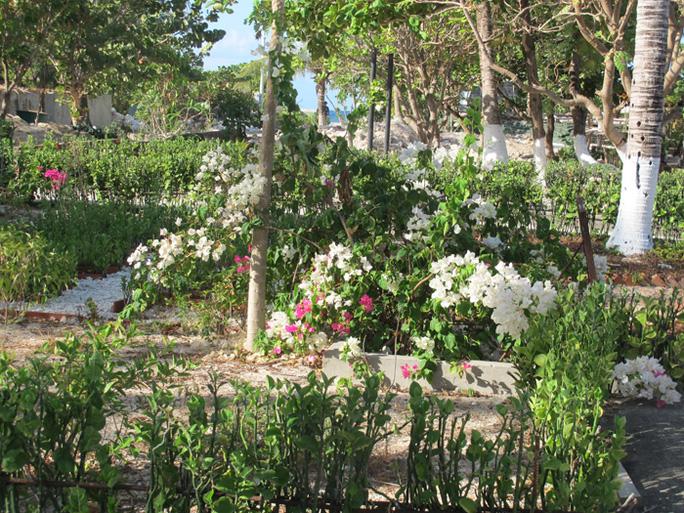 Chỉ trong vòng nửa năm, từ tháng 10-2014 đến nay, hoa đã ngợp trên từng góc nhỏ của đảo Nam Yết.
