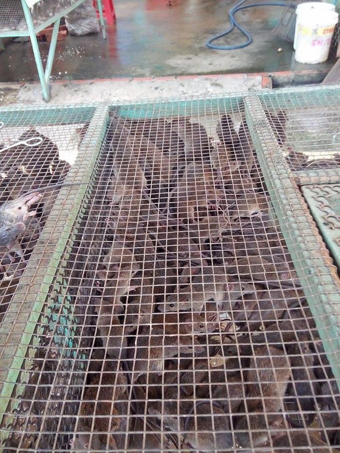 Nên chọn chuột cơm còn sống và nhờ người bán làm thịt tại chỗ sẽ ngon và đảm bảo an toàn vệ sinh