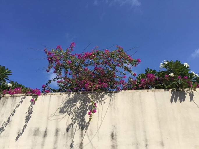 Hoa trên đảo Song Tử Tây