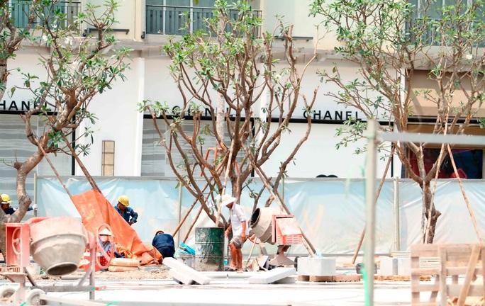 Cây xanh đang được trồng dọc đường Nguyễn HuệẢnh: Hoàng Triều