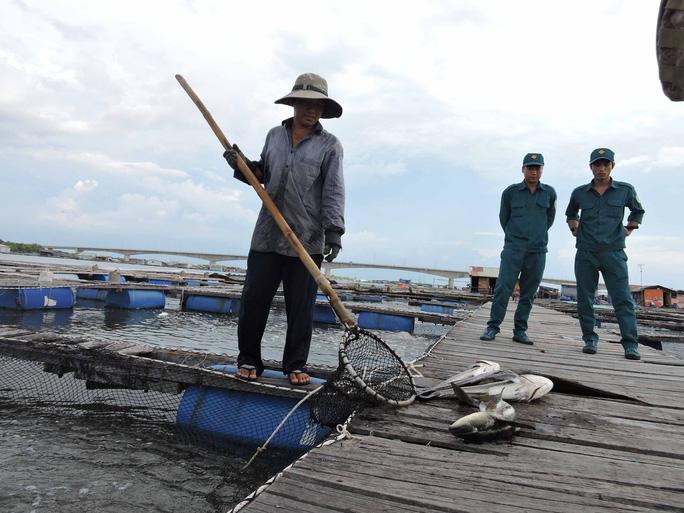 Cá chết được người dân vớt lên đổ bỏ