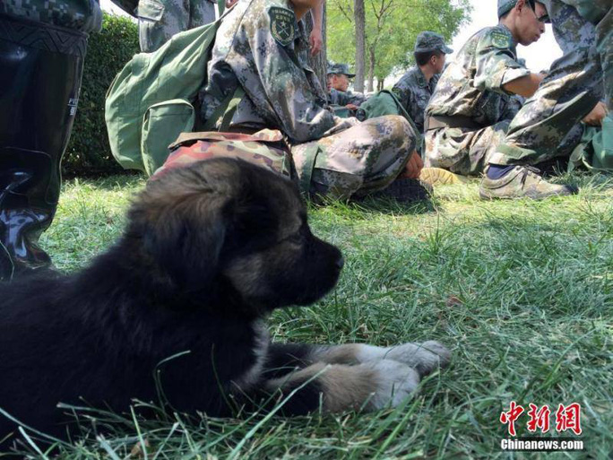Chú chó nhỏ được cứu từ tâm vụ nổ nhưng không hề bị thương... Ảnh: Chinanews