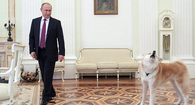 Tổng thống Putin và cô chó Yume. Ảnh: SPUTNIK NEWS