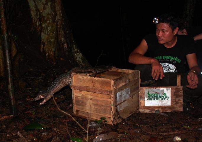 Tiến hành tái thả tê tê về rừng. Ảnh: SVW cung cấp