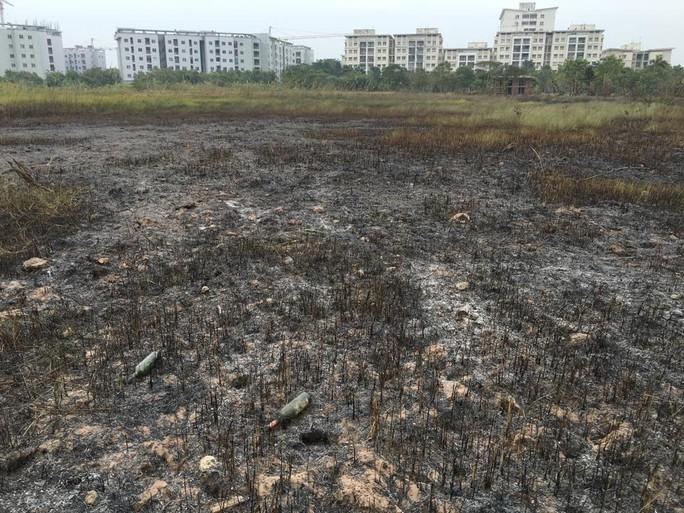 Hàng trăm m2 cỏ lau bị thiêu rụi sau vụ cháy
