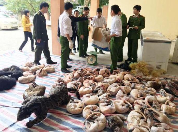 Số lượng lớn động vật hoang dã quý hiếm được lực lượng chức năng Thanh Hóa phát hiện, thu giữ
