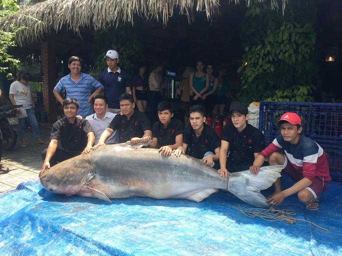 Giá cá hiện đang bán trên dưới 1,5 triệu đồng/kg