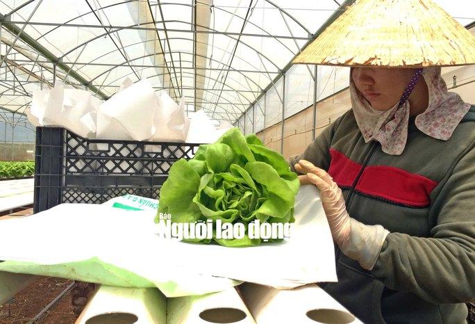 Sản phẩm đang hướng tới đạt chuẩn chất lượng Quốc tế - Global GAP không ảnh hưởng đến sức khỏe người tiêu dùng.