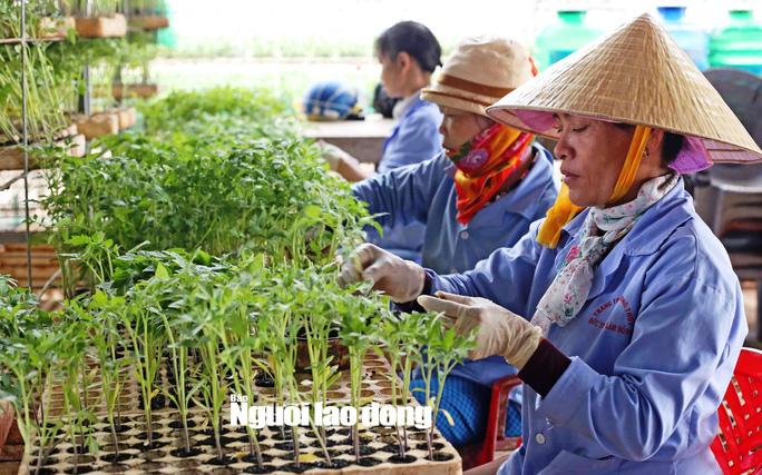 Các loại rau thủy canh trước khi đem ra gieo trồng phải được ươm trong những giá thể chứa xơ dừa xay nhuyễn cho nảy mầm.