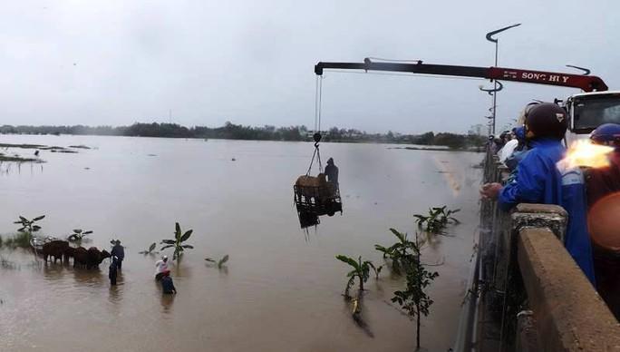 Lực lượng cứu hộ mang cả xe cẩu đến cầu Đà Rằng để giải cứu các đàn bò đang bị ngập ở TP Tuy Hòa (Ảnh: Q.T)